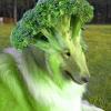 Bailey Retz Avatar